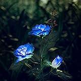 Rosas con luces solares LED para decoración de exteriores, Azul